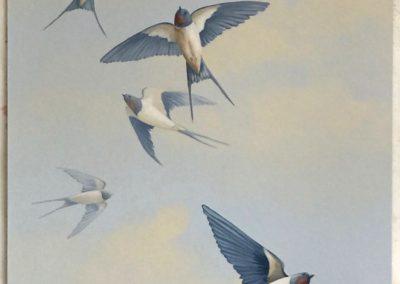 L' échantillon des hirondelles et ses 2 variantes de tons